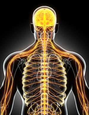 cbd and the nervous system for anxiety